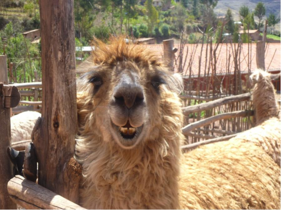 10 things I loved about Peru (and 5 I didn't!)