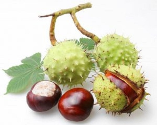 We offer any quantity of chestnut, elderberries