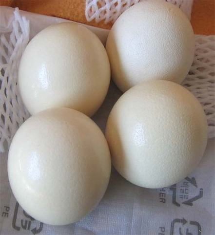 Quality ostrich chicks and eggs available