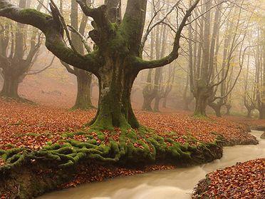Top de bosques en otoño