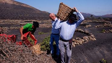 Vino de Lanzarote (Islas Canarias)