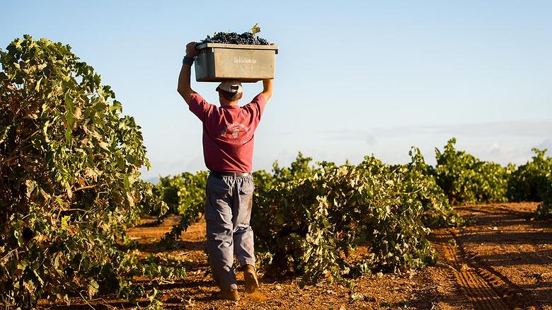 Bodegas y viñedos 'Pago de las Encomiendas' (Badajoz)