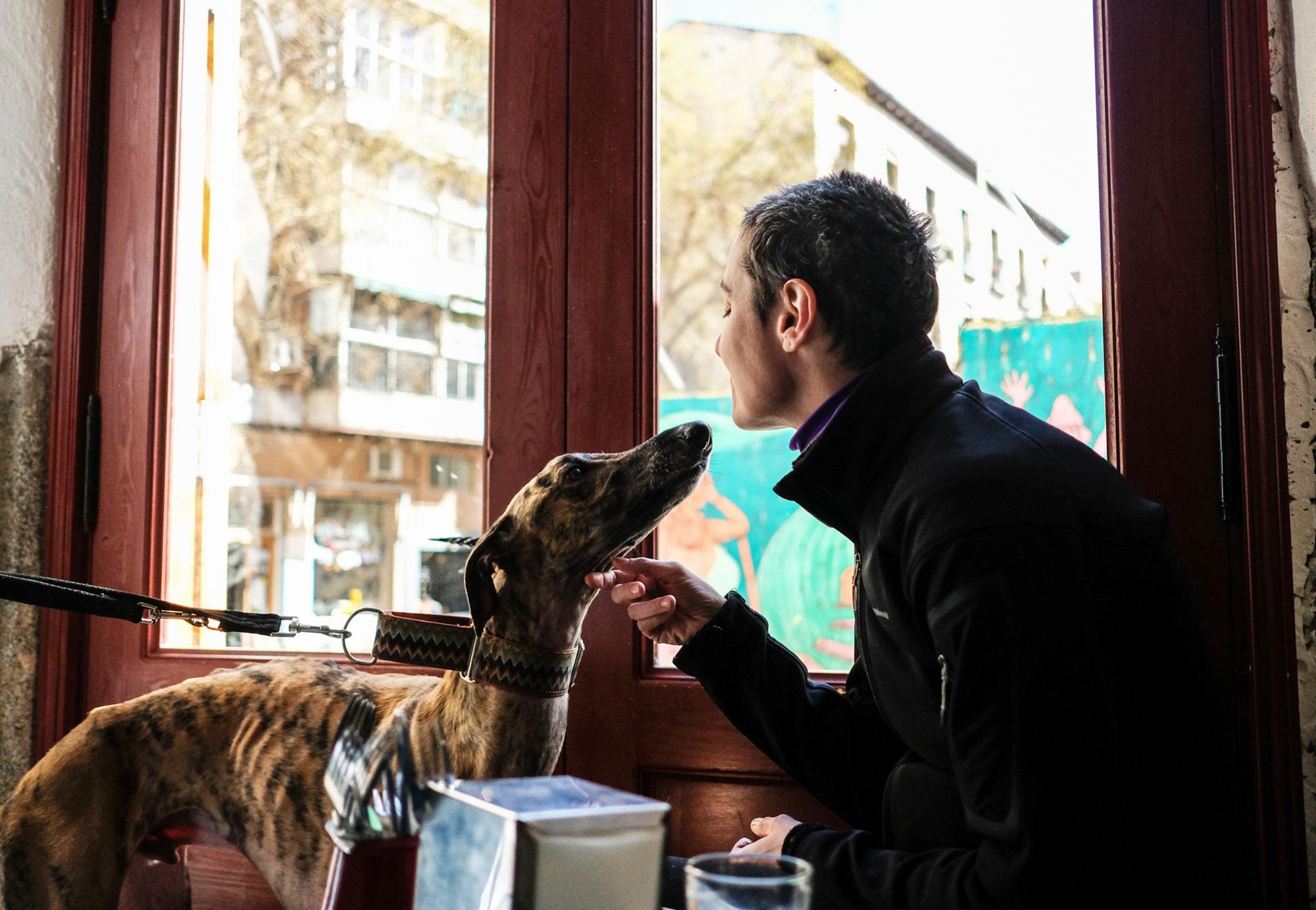 Fotomontaje de perros en el establecimiento de Lavapiés.