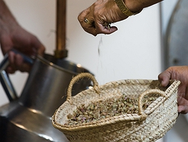 La receta secreta del tatarabuelo druida sigue intacta