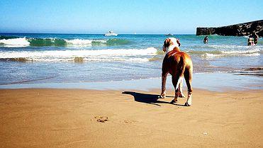 Playas para ir con tu perro