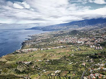Vinos de Tenerife: Denominaciones de Origen y bodegas