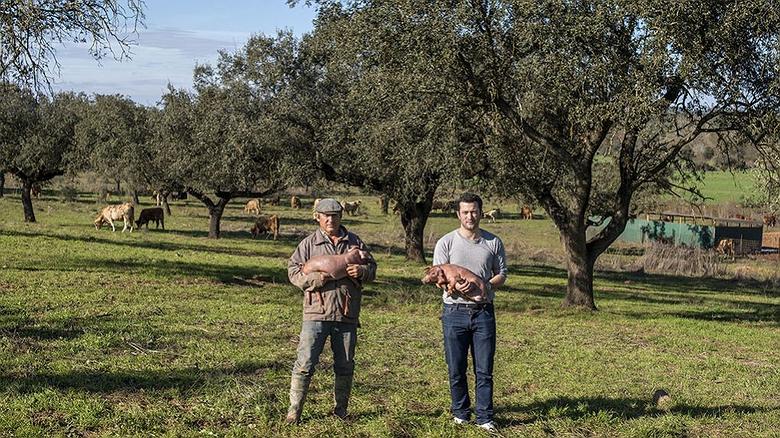 Cochinillo ibérico de País de Quercus (Badajoz)