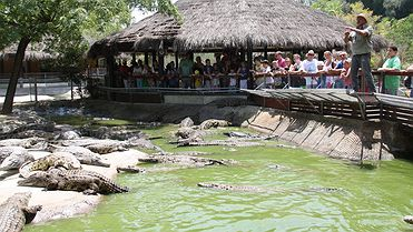 Cocodrilo Park: cocodrilos al calor de Torremolinos
