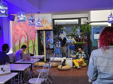 Espai DeGats Cat Café, el primer gatobar de Barcelona