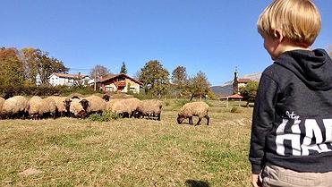Ocio con niños en Euskadi: pastor por un día