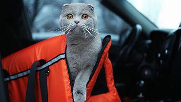 Consejos para viajar con tu animal de compañía