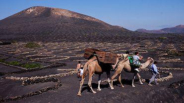 Los vinos de Lanzarote (Islas Canarias)