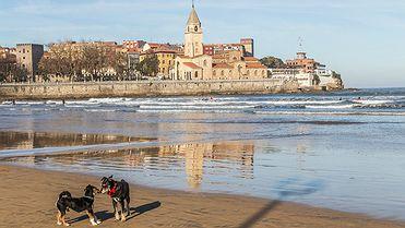 Gijón con perros