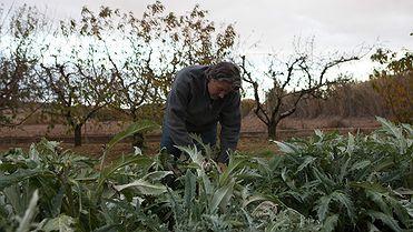 La huerta de Tudela (Navarra) en otoño e invierno