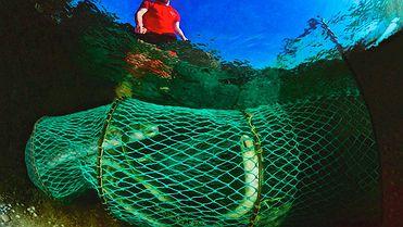 Pescar lamprea en Arbo (Pontevedra)