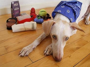 ¿Cómo viajar con perro?