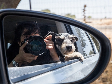 Vacaciones con perro: manual de instrucciones