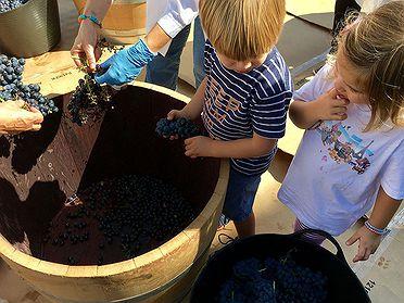 Vendimiar con niños en Aranda de Duero (Burgos)