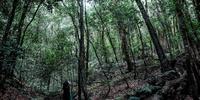 Bosque del Parque Nacional de Garajonay, La Gomera.