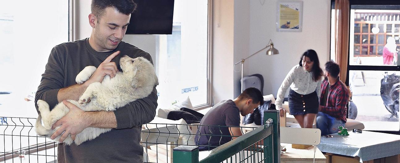 'The Doger Café': cafetería con cachorros en Madrid