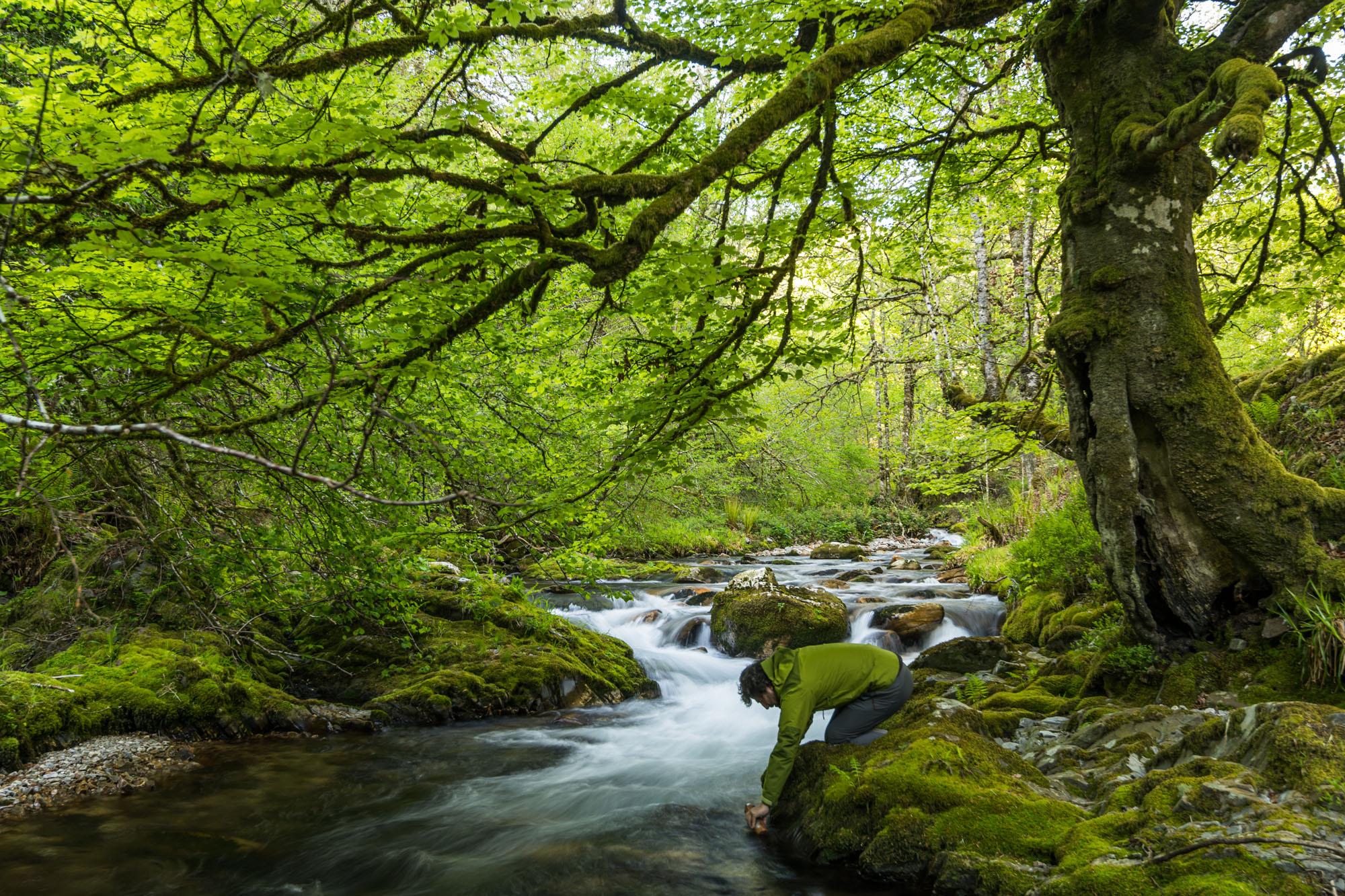 Ruta por el bosque de Muniellos (Asturias) | Guía Repsol