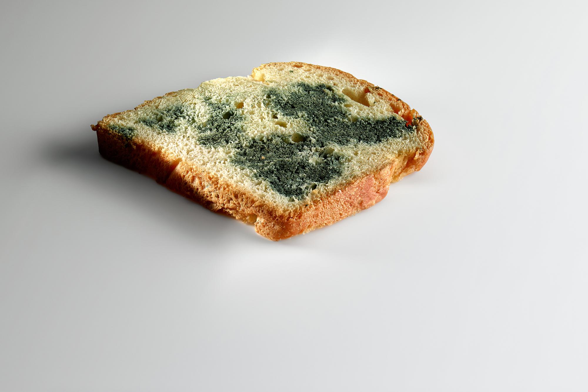 Un pan 'brioche' inoculado con 'penicillium roqueforti', un hongo que se usa en los quesos azules. Foto: Mugaritz.