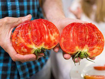 Tomates antiguos de Navarra: feo de Tudela y rosa de Barbastro