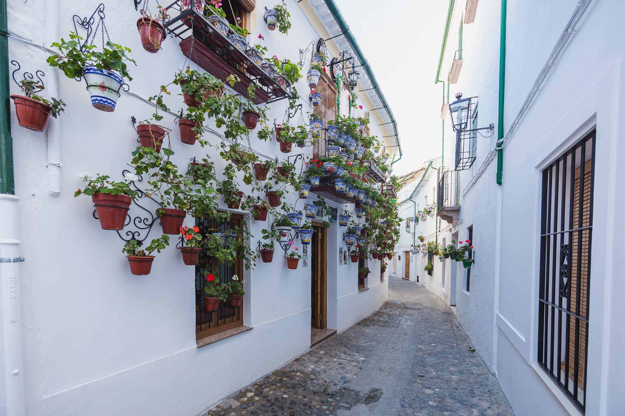 La tradición tan extendida por toda Andalucía y especialmente por Córdoba también está presente en las calles prieguenses.