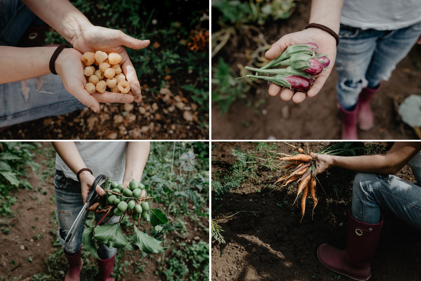 Parte de la cesta de la compra: frambuesas, miniberenjenas, 'kiwiños' y zanahorias.