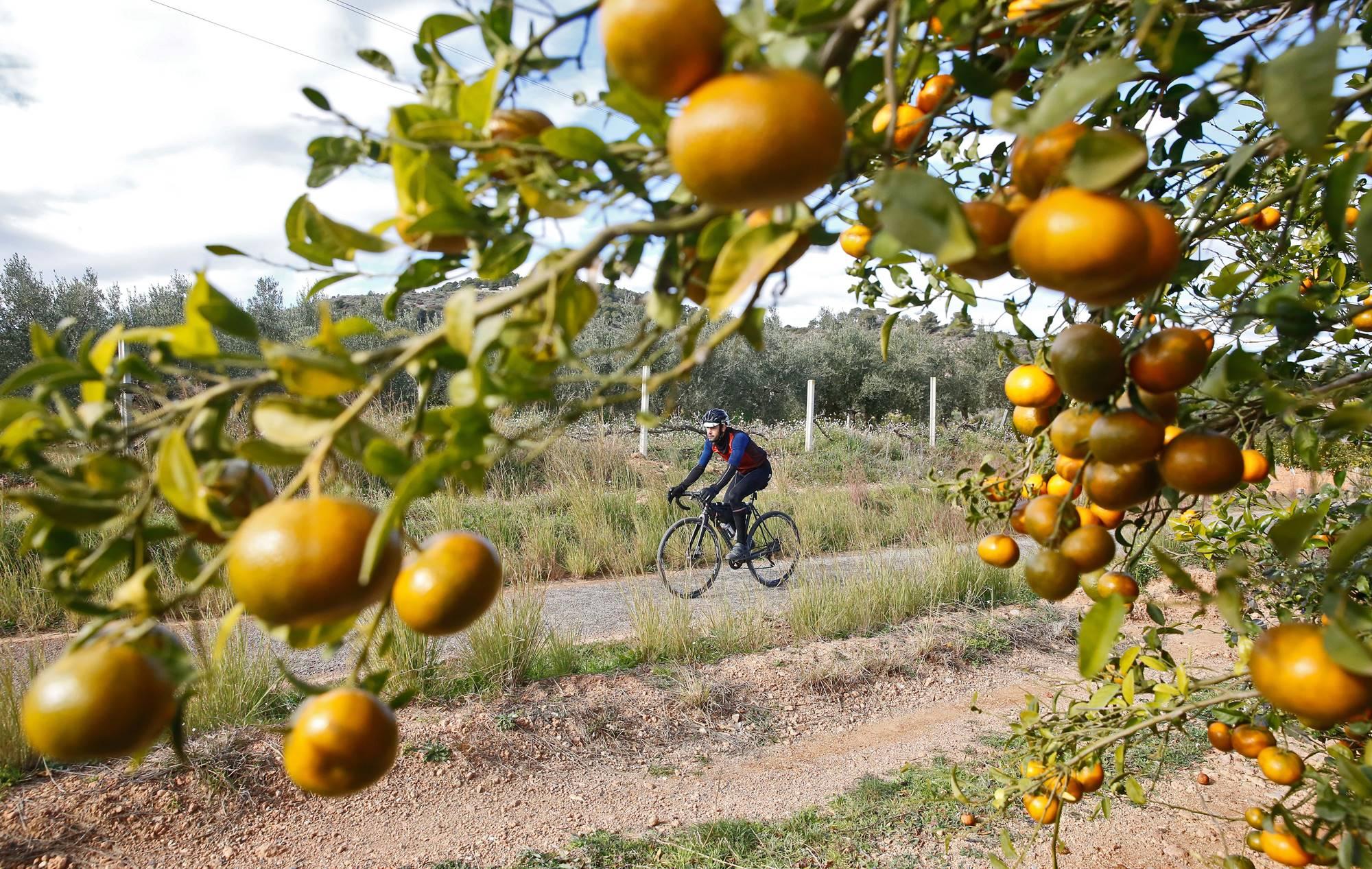 Uno de los mejores momentos de la ruta: verse rodeado de naranjos.