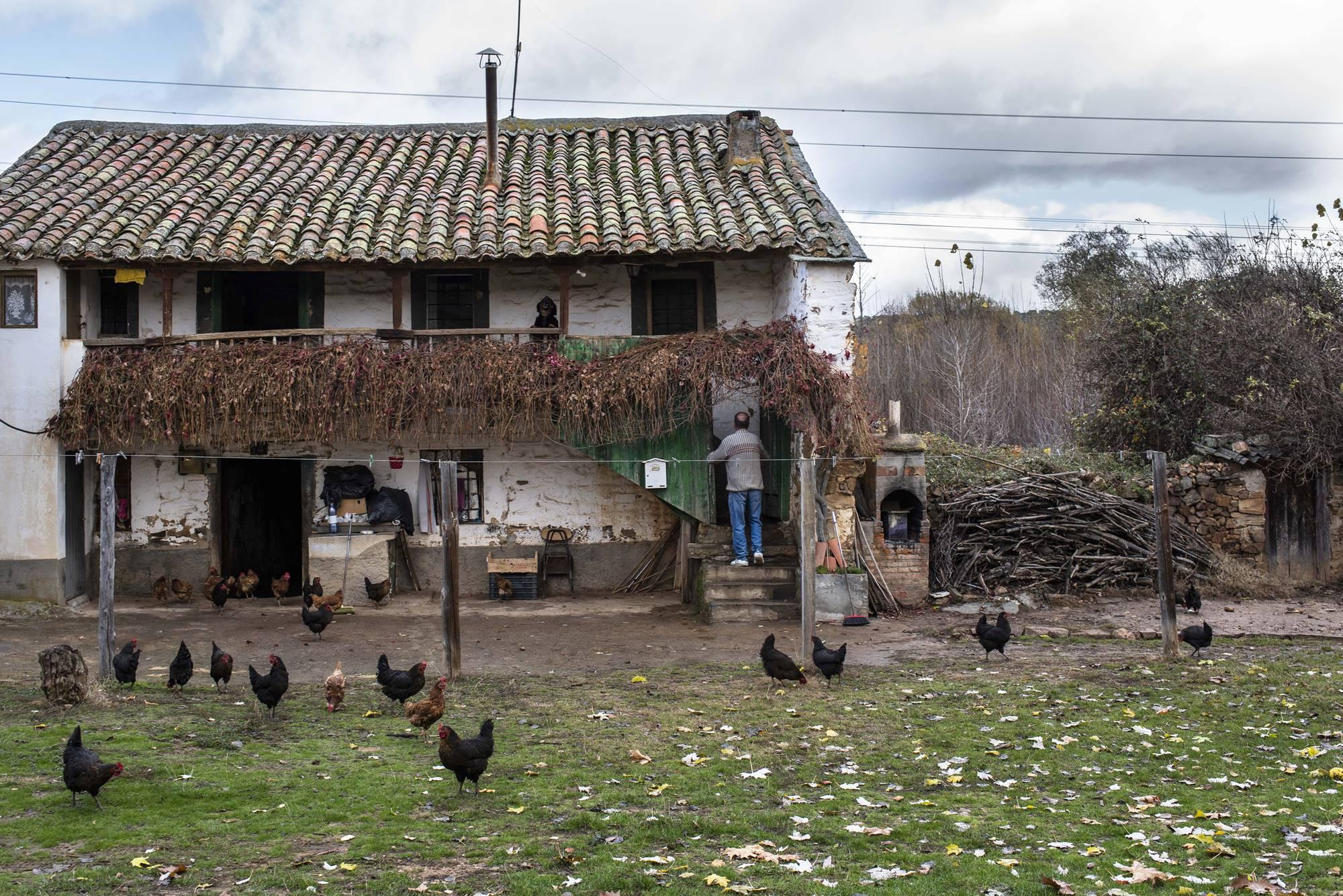 Gallinas y cerdos para la matanza han formado parte de la economía doméstica durante siglos.