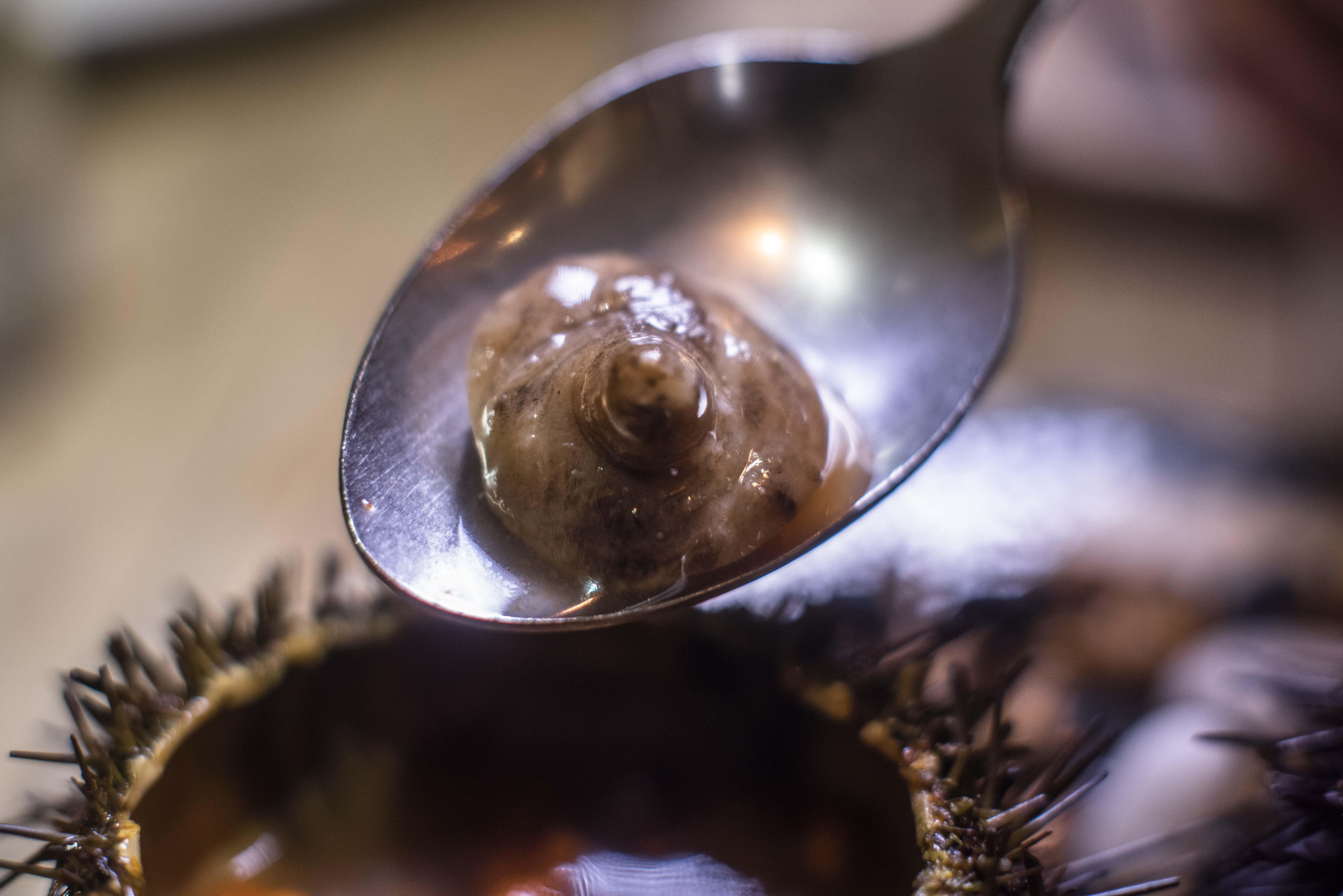 La ubre de cerda procede de un porcino ibérico de bellota extremeño.