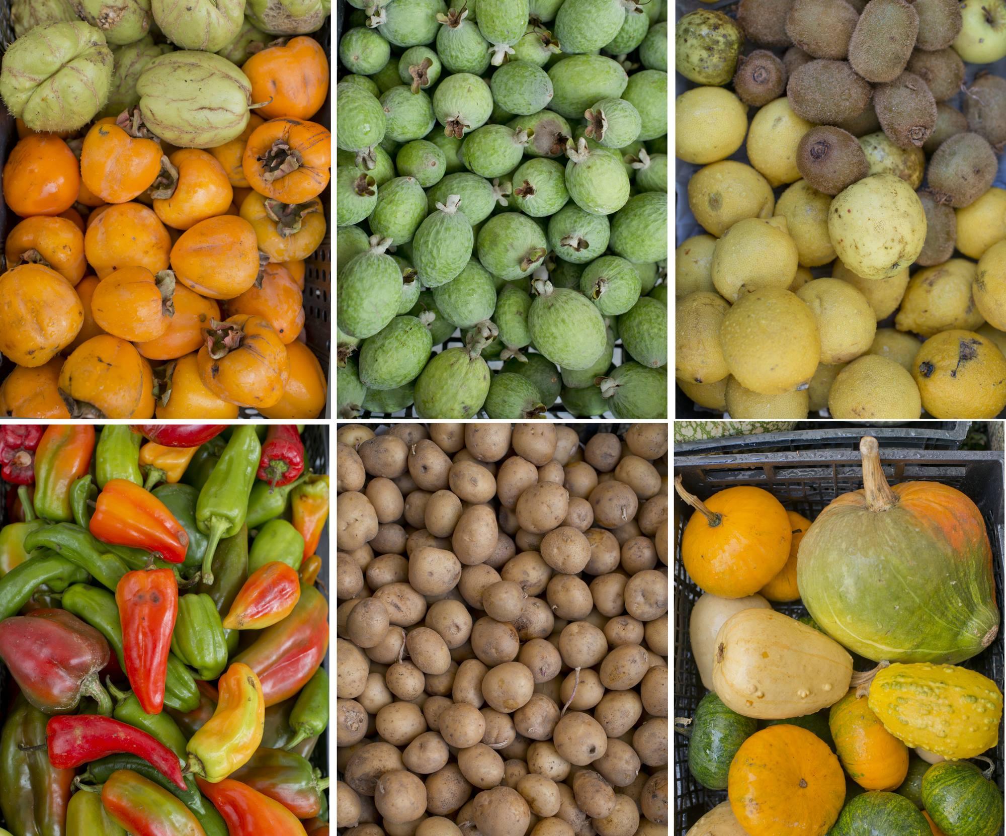 Caquis, aguacates, manzanas, kiwis, pimientos, patatas y calabazas. La cosecha de las paisanas.