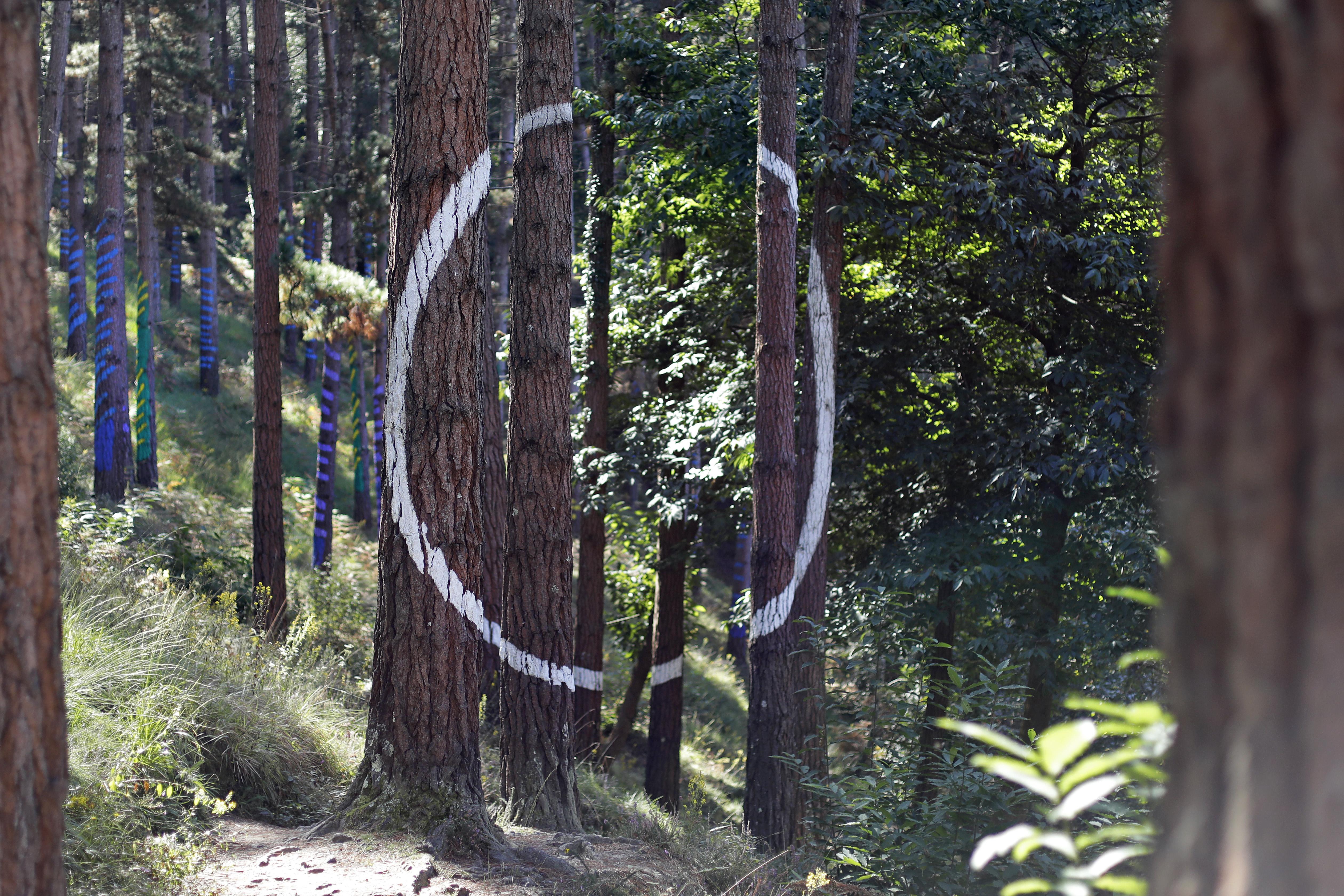 Además de usar los árboles como lienzos, Ibarrola creó auténticos juegos visuales.