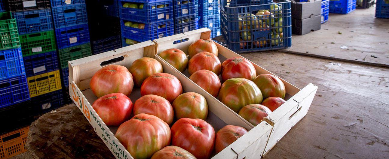 Los mejores tomates de ensalada de toda España