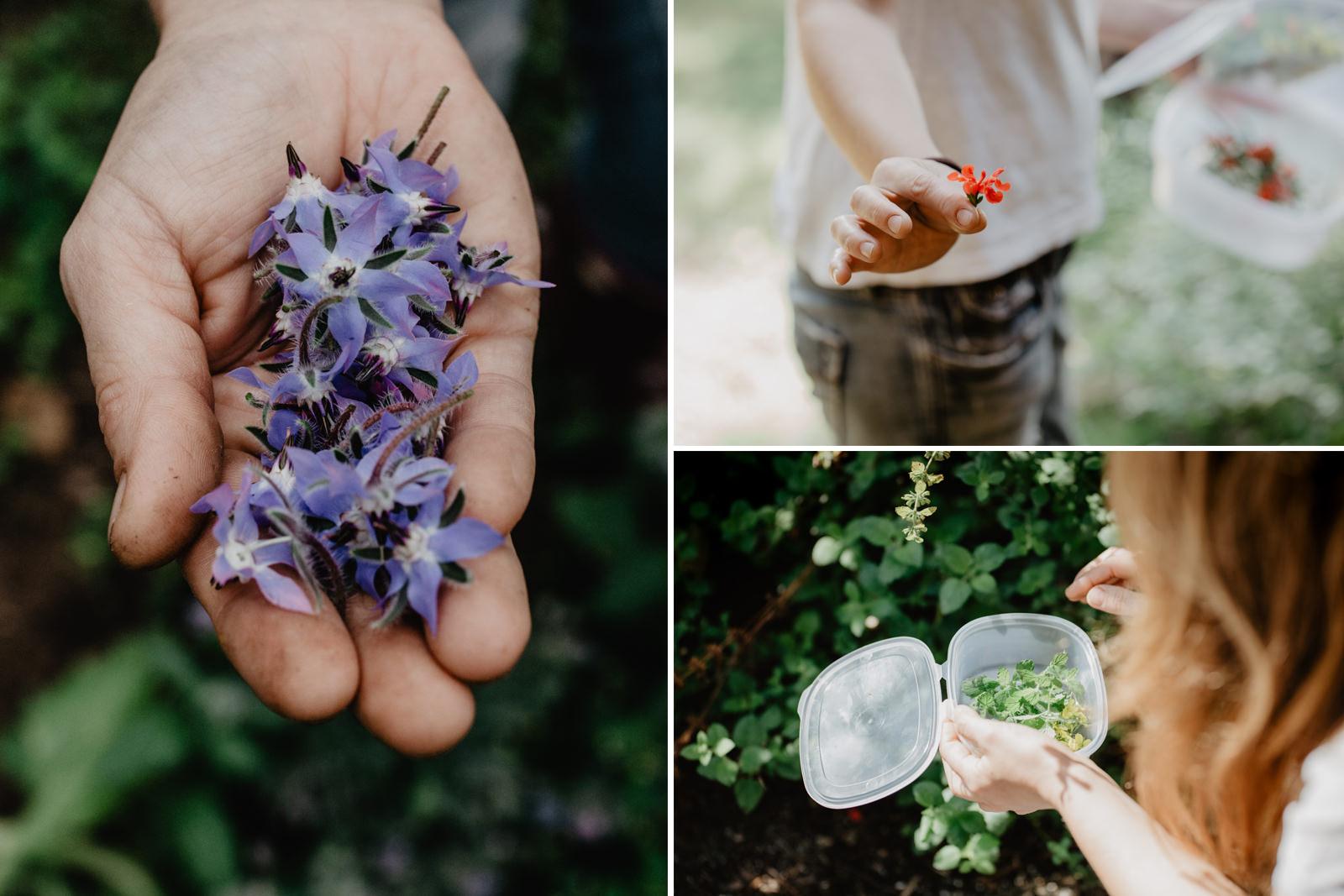 Lucía elige uno a uno las hierbas y flores que recoge al menos una vez al día en su huerto familiar.