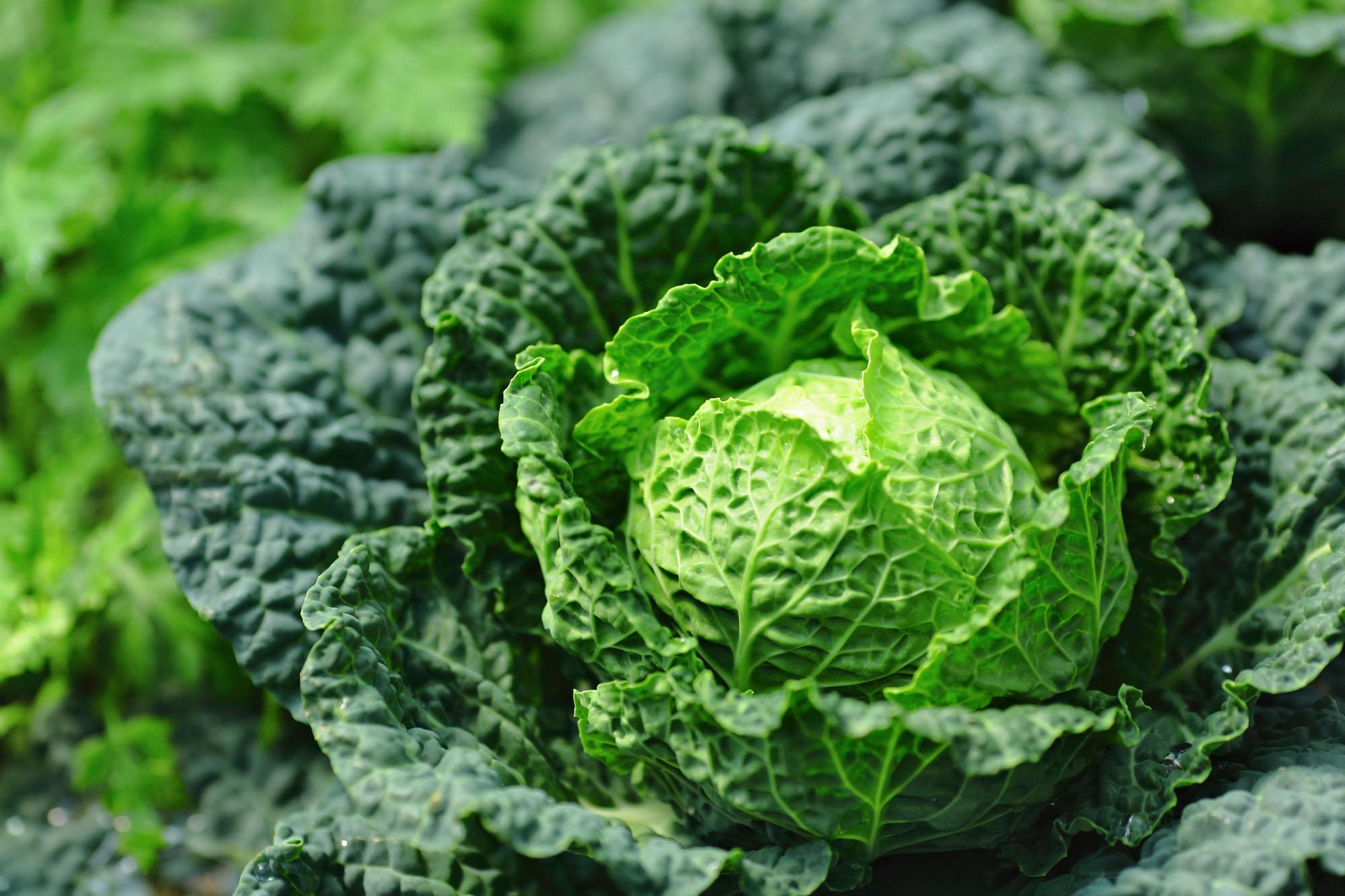 ¡Dale una oportunidad a las verduras de olor! Foto: Shutterstock.