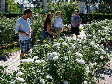 Rosaleda del Parque del Oeste: un paseo entre rosas