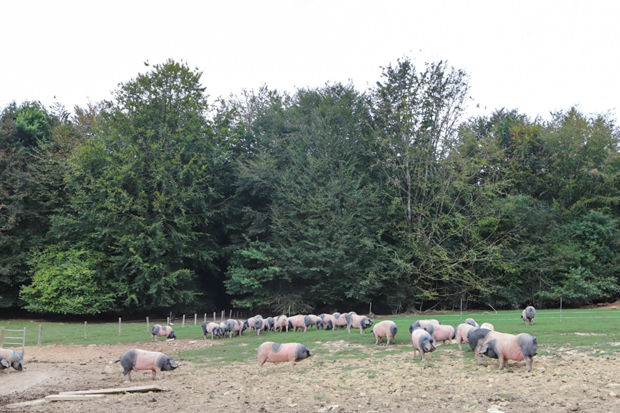 El Valle de Larraun, un paraíso verde para el crecimiento del ganado.