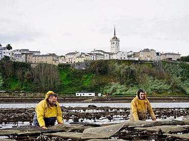 Cultivo de ostras 'Acueo' en Castropol: cómo cultivan las ostras