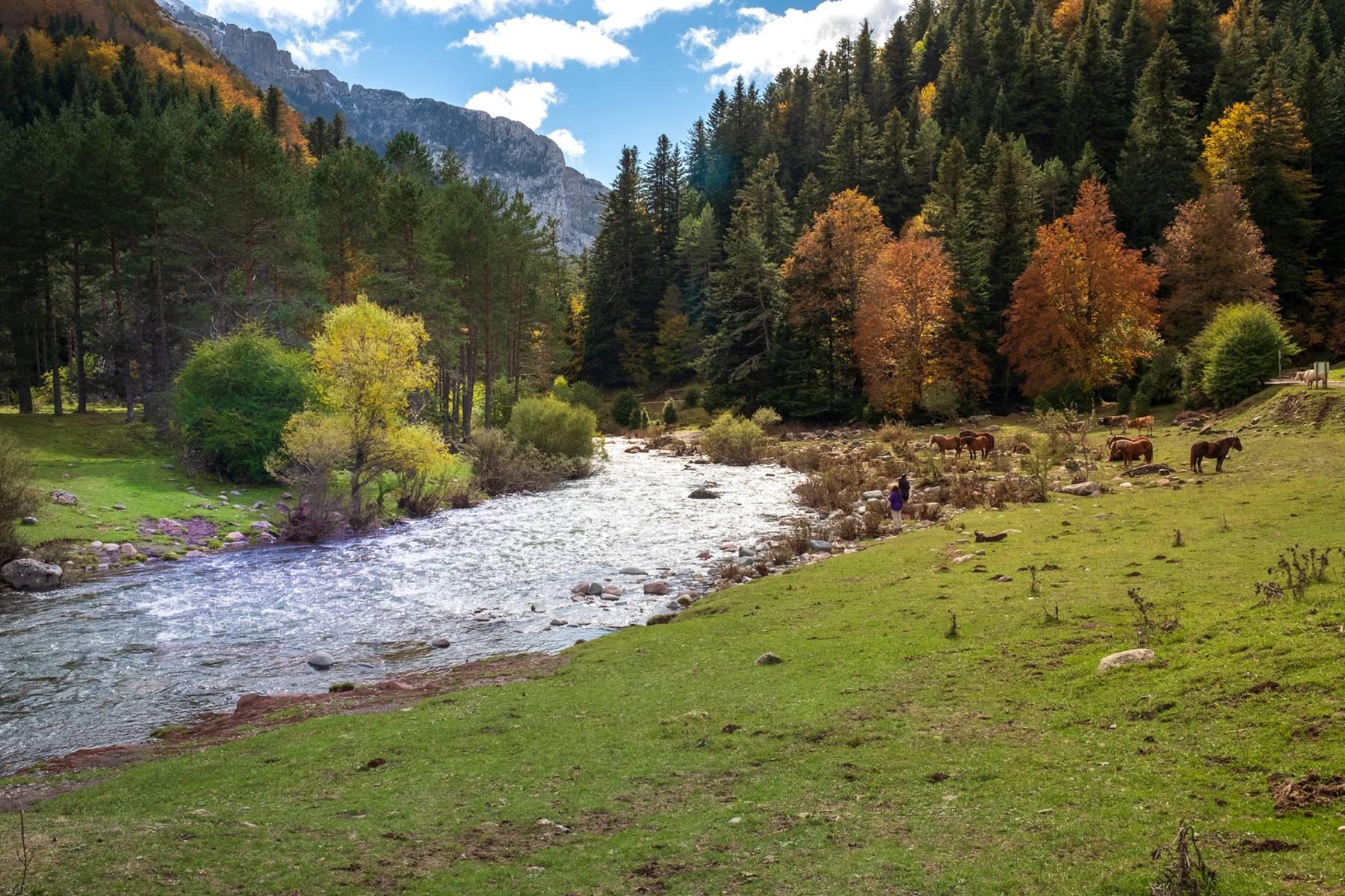 Excursión A La Selva De Oza Huesca Guía Repsol