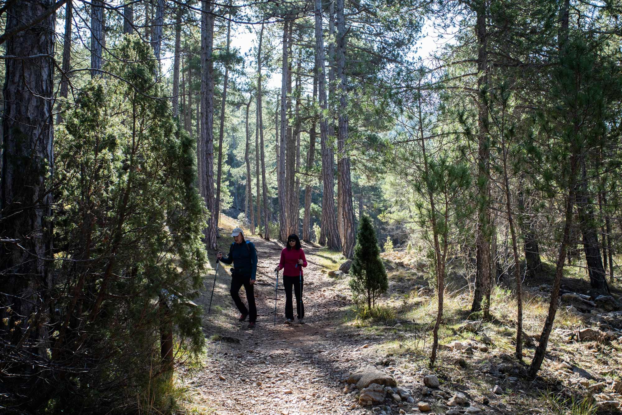 Bosque en el Barranco de Pegunta.