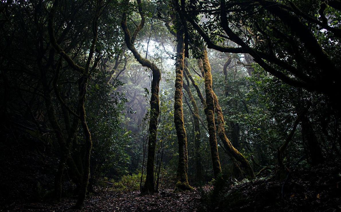 Entre senderos y barrancos de Laurisilva