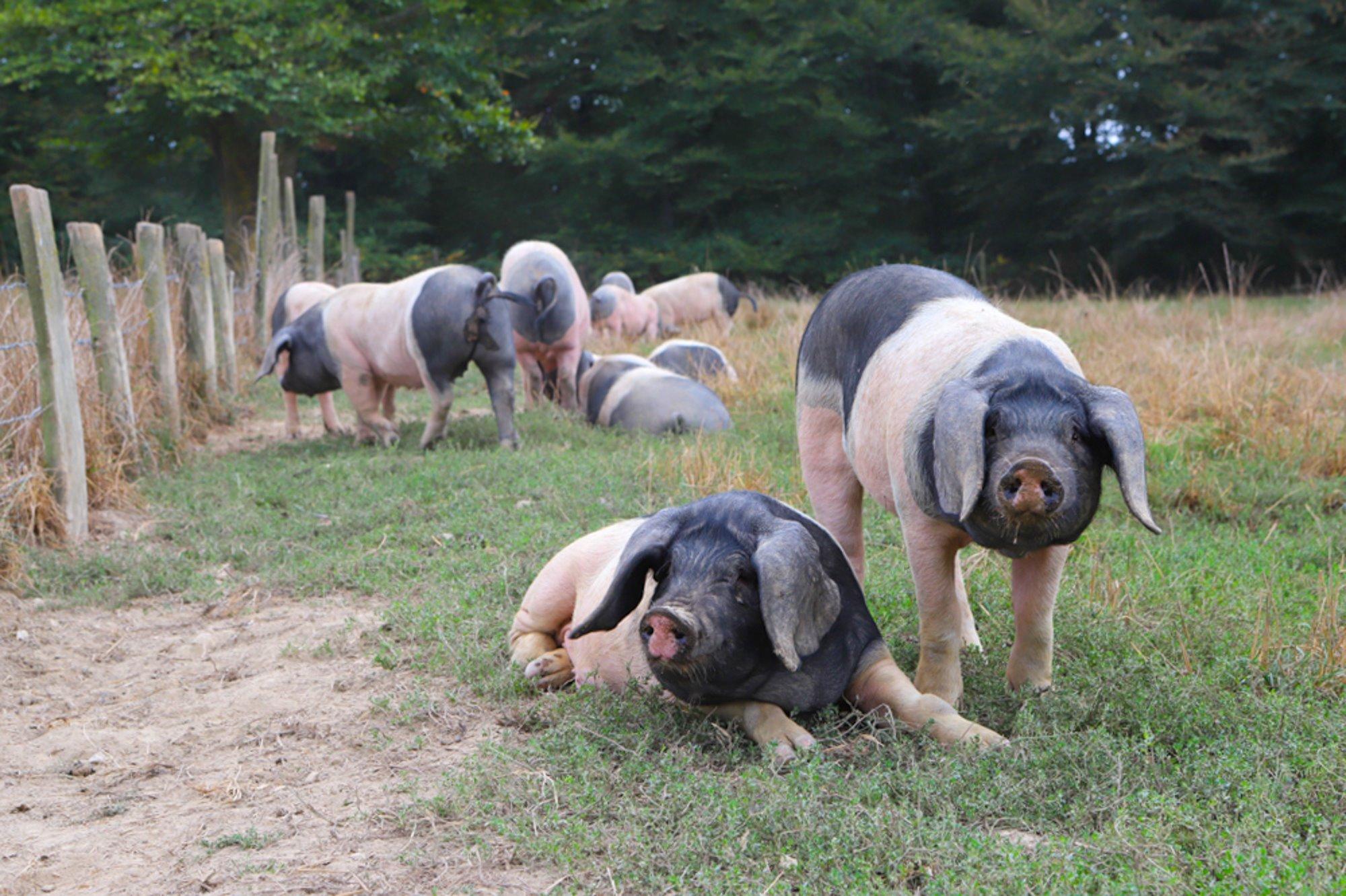 """El objetivo es que los animales tengan una """"calidad de vida máxima""""."""
