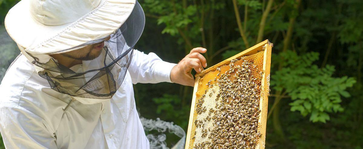La cultura de la miel en España