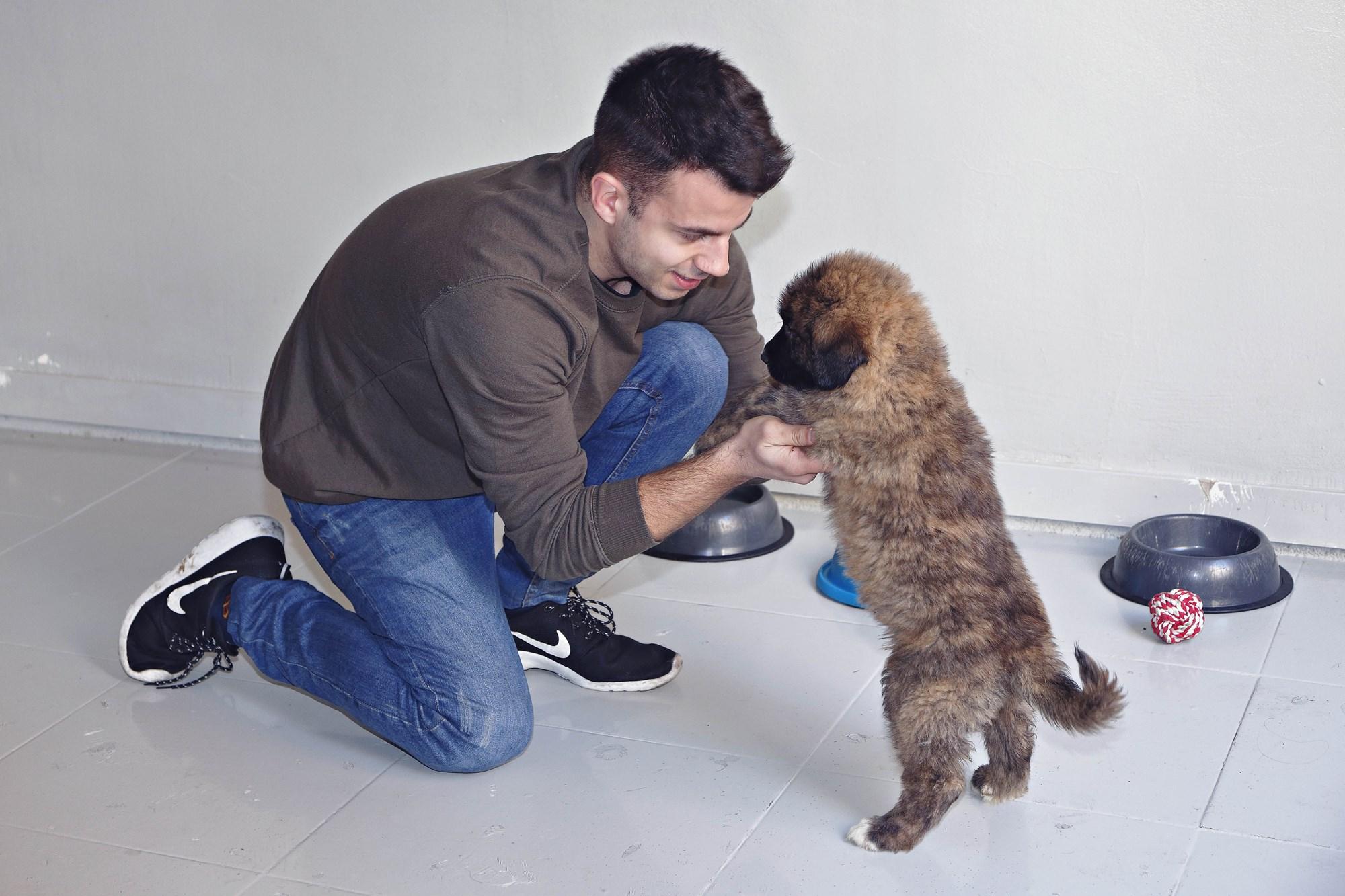 Cachorro
