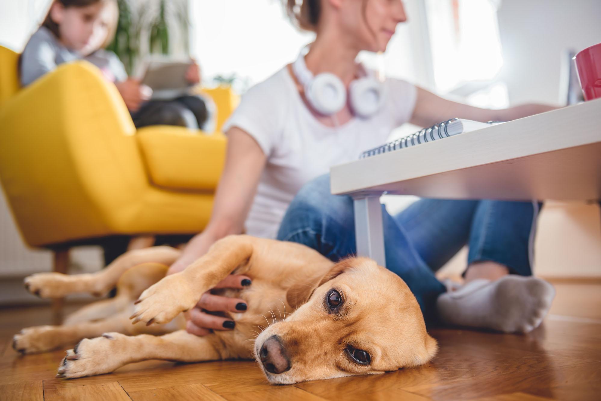 Ideas y consejos para hacer con tu mascota en casa | Guía Repsol