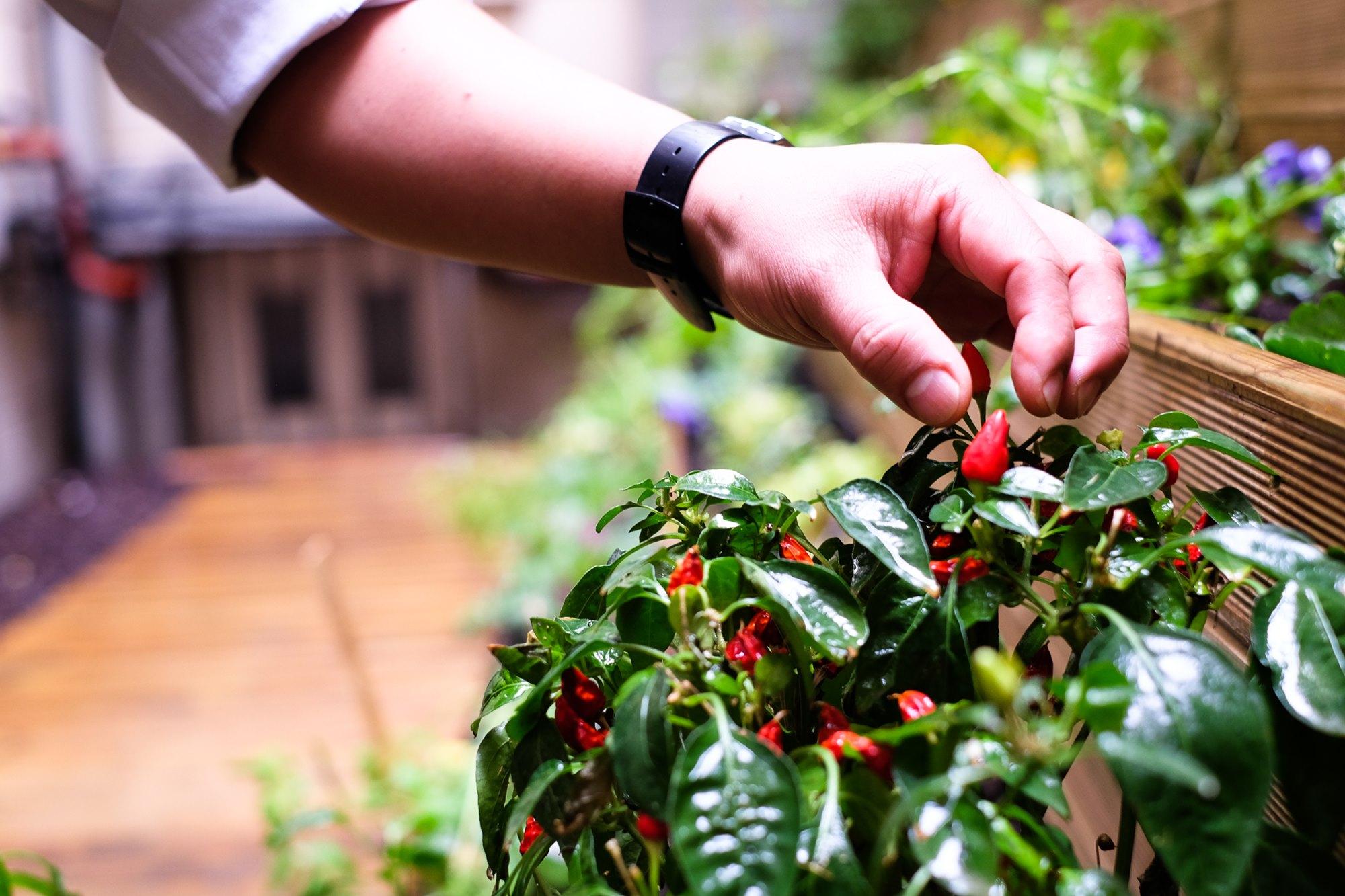 Diego Jacobo recurre cada día al pequeño huerto situado en el patio interior de su restaurante.