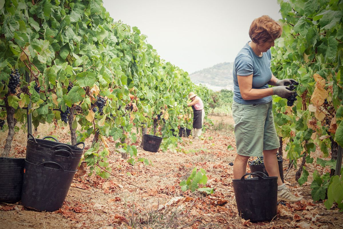 'Bodegas Tajinaste' ha contribuido a desarrollar una conciencia sobre el vino y el paisaje de La Orotava.