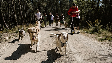 Viajar con perro a la Ribeira Sacra (Galicia)